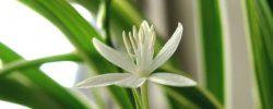 4 květiny, o které se není třeba moc starat, a udělají parádu