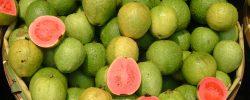 Guava: Bohatý zdroj lykopenu, který překonává špenát i jahody
