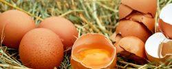 Zjistěte, proč jsou vejce pro lidské zdraví tak důležité