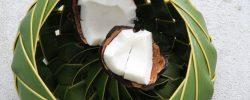 Kokos se ukázal jako významná prevence proti závažným onemocněním