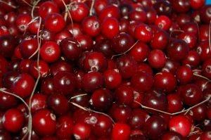 cranberries-1714174_960_720