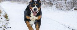 Zimní sporty, které si můžete užít se psem