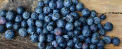 Superpotraviny: Fenomén dnešní doby
